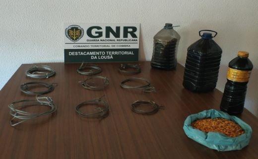 Foto de Pampilhosa da Serra - Detido por caça proibida